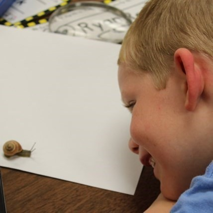Close up shot of boy student examining a snail at the Elementary School.